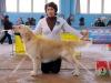 Kanrit Daly Ruffino Международная выставка; R-CACIB